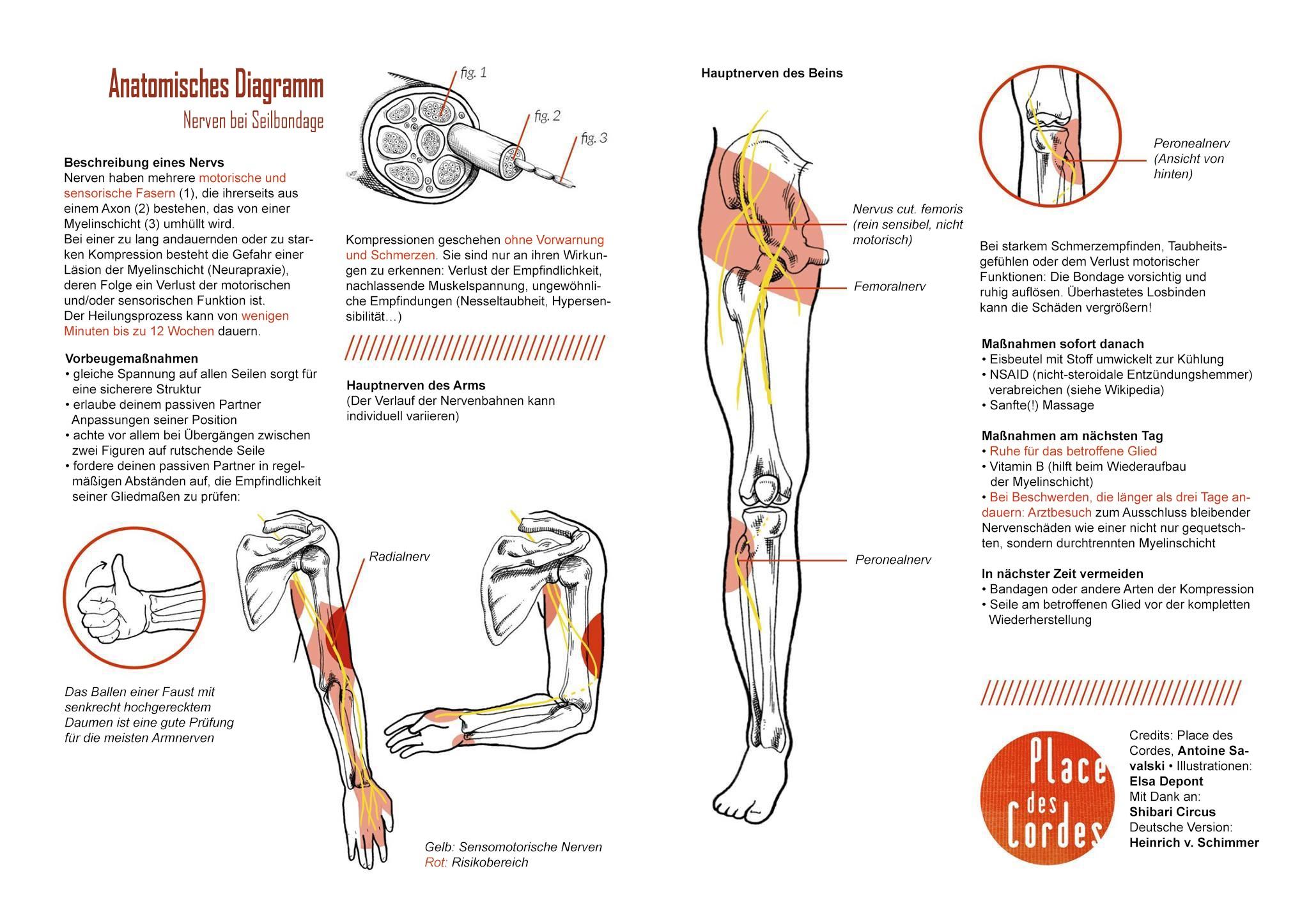 Anatomie Flyer Place des Cordes deutsch